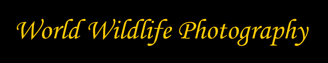 Logo banner for www.worldwildlifephotography.com